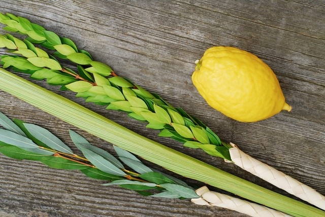 Image result for lulav and etrog pic